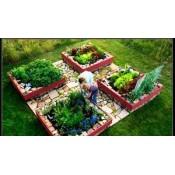 Сад и огород (244)
