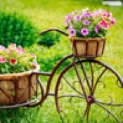 Клумбы и цветочницы (0)