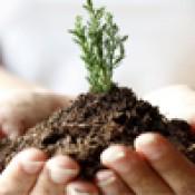 Грунты для растений (15)