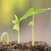 Регуляторы роста (15)