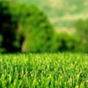 Газонные травы  (12)