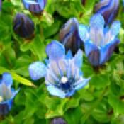 Многолетние цветы (3)