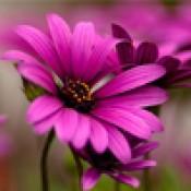 Цветы и газоны (22)
