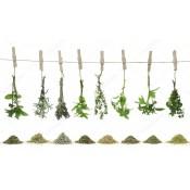 Зелень и пряности (14)