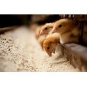 Корма для животных (4)